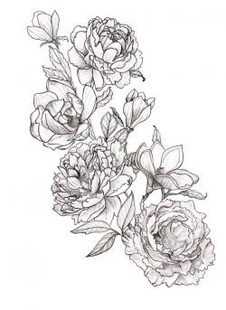 Drawn peony simple