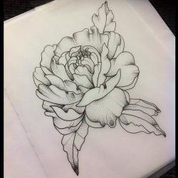 Drawn peony sketch