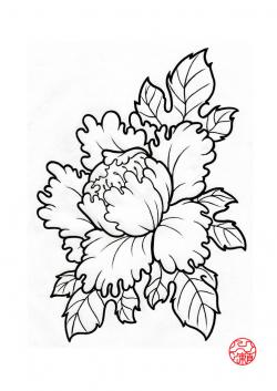 Drawn peony traditional japanese flower