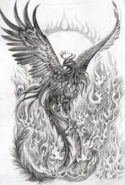 Drawn phoenix Phoenix Bird