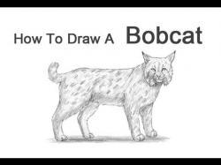 Drawn lynx easy