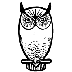 Drawn owl east