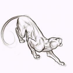 Drawn panther sketch