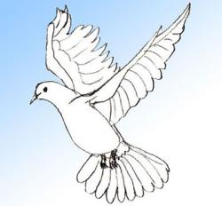 Drawn dove flying pigeon
