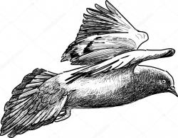 Drawn pidgeons flight