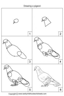 Drawn pidgeons hand