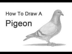 Drawn pidgeons pegion