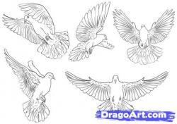 Drawn pidgeons unique