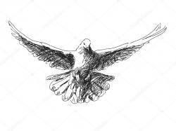Drawn pidgeons vector