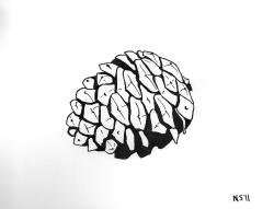 Drawn pine cone simple