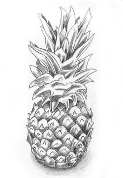 Drawn pineapple sketched