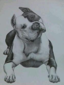 Drawn pit bull american bully