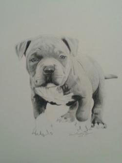 Drawn bulldog kool