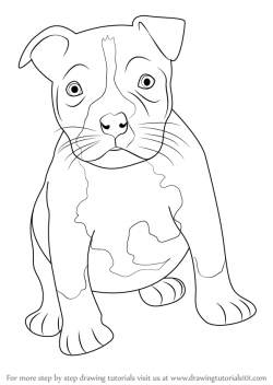 Drawn pitbull pitbull puppy
