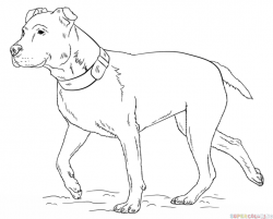 Drawn pitbull sketch