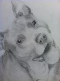 Drawn pitbull pencil drawing