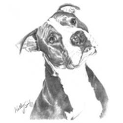 Drawn pit bull pitbull dog