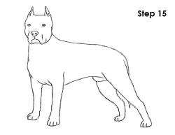 Drawn pitbull pitbull dog