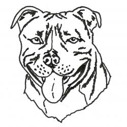 Drawn bull terrier