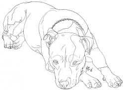 Drawn pit bull wildcat