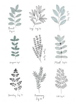 Drawn herbs illustration