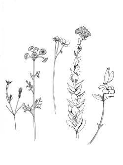 Drawn wildflower dainty flower