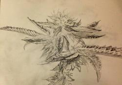 Drawn cannabis pencil