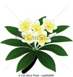 Frangipani clipart tropical