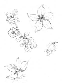 Drawn wildflower sketch