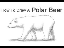 Drawn polar  bear