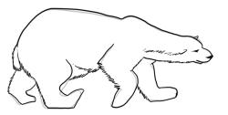 Drawn polar  bear tundra animal