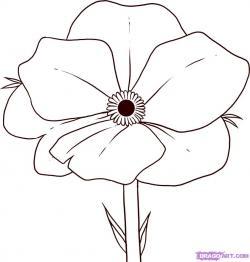 Drawn poppy