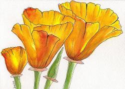 Drawn poppy california state
