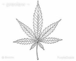 Drawn cannabis zentangle