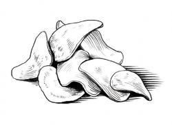 Drawn potato large