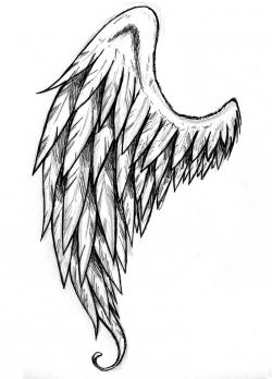 Drawn wings side view
