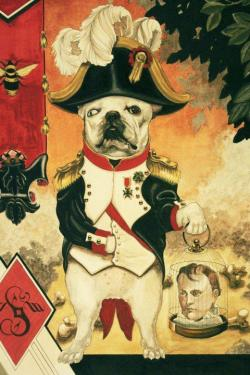 Drawn pug napoleon