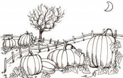 Drawn pumpkin pumpkin patch