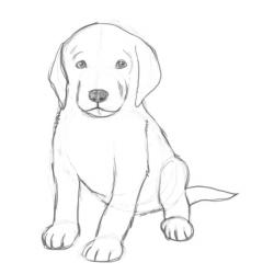 Drawn pice puppy