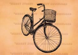 Drawn pushbike retro bicycle