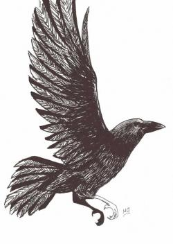 Drawn raven flight drawing