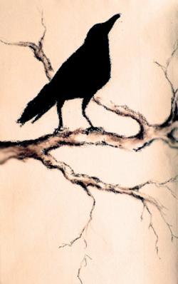 Drawn raven easy