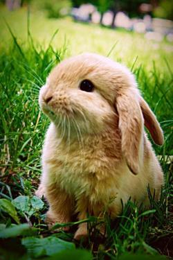 Drawn rabbit fluffy bunny