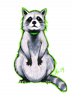 Drawn racoon deviantart