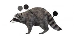 Drawn raccoon head