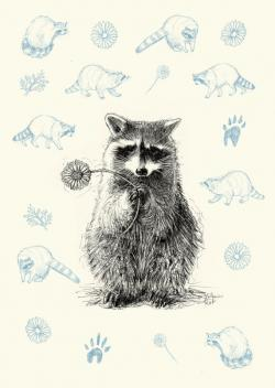 Drawn racoon little