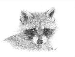 Drawn racoon pencil