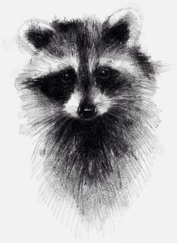 Drawn raccoon racoon