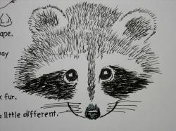 Drawn raccoon face