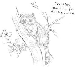 Drawn racoon tree drawing